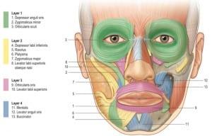 músculos que intervienen en la expresión
