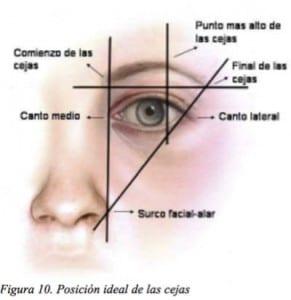 Proporciones de las cejas